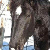 Adopt A Pet :: Slick - Washington, CT