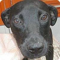 Adopt A Pet :: Bree - dawson, GA