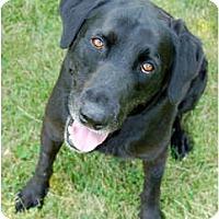 Adopt A Pet :: Travis - Kansas City, MO