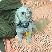 Adopt A Pet :: Barney - Tumwater, WA