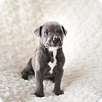 Adopt A Pet :: Pip - Owasso, OK