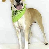 Adopt A Pet :: Hudson - Orlando, FL
