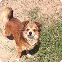 Adopt A Pet :: Bam Bam-ADOPTION PENDING - Baton Rouge, LA