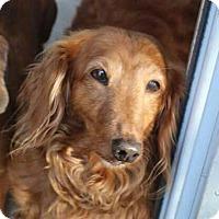 Adopt A Pet :: Frankie D - Marcellus, MI