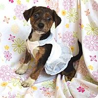 Adopt A Pet :: Venice - Ijamsville, MD