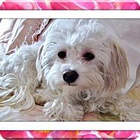 Adopt A Pet :: Adopted!!Kimra - MN - Tulsa, OK