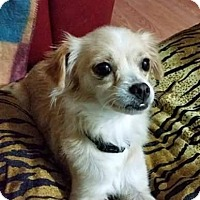 Adopt A Pet :: Rose - Leduc, AB