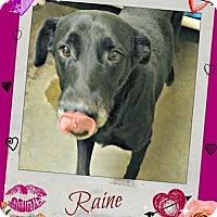 Adopt A Pet :: Raine - Benton, AR