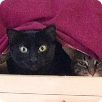 Adopt A Pet :: Diandra - Mississauga, Ontario, ON
