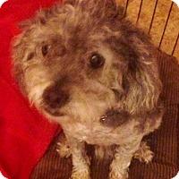 Adopt A Pet :: Einstein - Christiana, TN