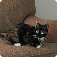 Adopt A Pet :: Mia - Alexandria, VA