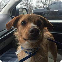 Adopt A Pet :: Rusty - Chicago, IL