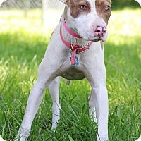 Adopt A Pet :: Chia - Waldorf, MD