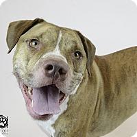 Adopt A Pet :: ZEUS - Nashville, TN