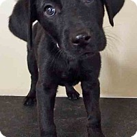 Adopt A Pet :: ADOPTED!!!   Noelle - Hinsdale, IL