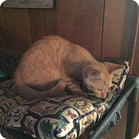 Adopt A Pet :: Baby Ted - Clay, NY