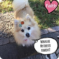 Adopt A Pet :: Faith - Dallas, TX
