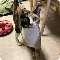 Adopt A Pet :: Juliet - Island Park, NY