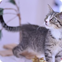 Adopt A Pet :: Alexander - Virginia Beach, VA
