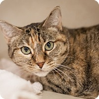 Adopt A Pet :: Lucy - Dallas, TX