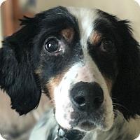 Adopt A Pet :: COOPER - Pine Grove, PA