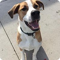 Adopt A Pet :: Gus - Mt. Pleasant, MI