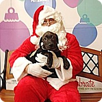 Adopt A Pet :: Pudge - Silsbee, TX