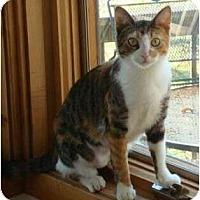 Adopt A Pet :: SugarPlum - Port Republic, MD