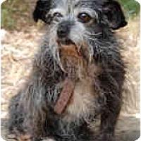 Adopt A Pet :: Bubbles - San Francisco, CA