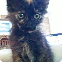 Adopt A Pet :: Torrie - North Highlands, CA