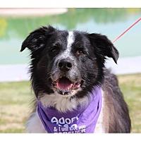Adopt A Pet :: Maggie - Tempe, AZ