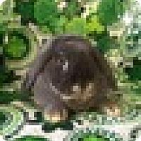 Adopt A Pet :: Clover - Paramount, CA