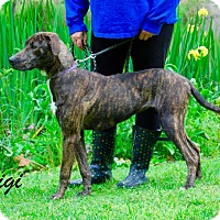 Adopt A Pet :: Gigi - Daleville, AL