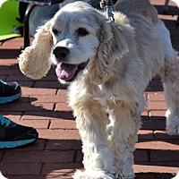 Adopt A Pet :: Peanut - Albemarle, NC