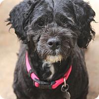 Adopt A Pet :: Chyna - Woonsocket, RI