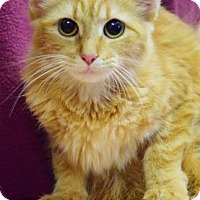 Adopt A Pet :: Nala - Bradenton, FL