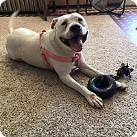 Adopt A Pet :: Hope - Kewanee, IL