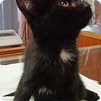 Adopt A Pet :: Sasha - Lebanon, PA