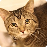 Adopt A Pet :: Madison - Murfreesboro, NC
