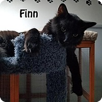 Adopt A Pet :: Tiny and Finn - Redwood City, CA