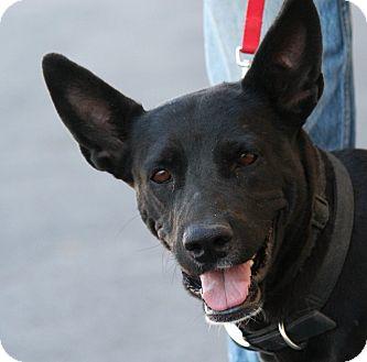 Labrador Retriever Mix Dog for adoption in Palmdale, California - Alice
