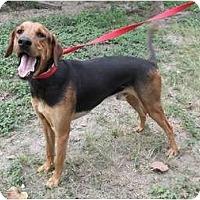 Adopt A Pet :: Popito - Key Biscayne, FL