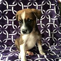 Adopt A Pet :: PONGO - Carson, CA