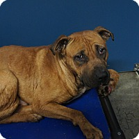 Adopt A Pet :: Hairy - Henderson, NC