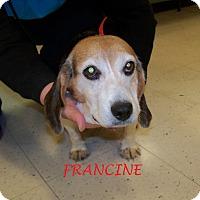 Adopt A Pet :: FRANCINE - Ventnor City, NJ