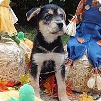 Adopt A Pet :: Hans - West Chicago, IL
