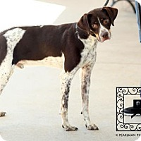 Adopt A Pet :: Shiloh - Fairfax, VA