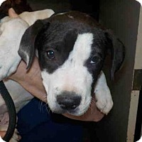 Adopt A Pet :: A581886 - Long Beach, CA
