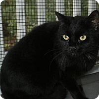 Adopt A Pet :: Star - Kinston, NC