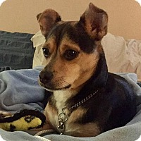Adopt A Pet :: Jack - Costa Mesa, CA
